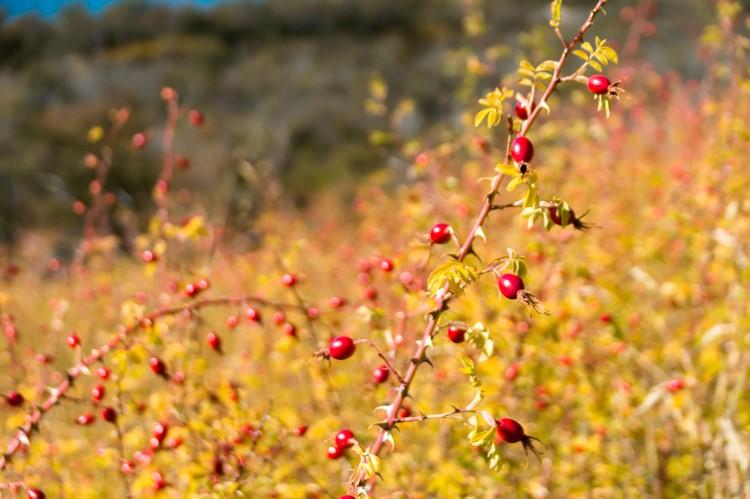 Mallin Colorado Ecolodge Lake General Carrera
