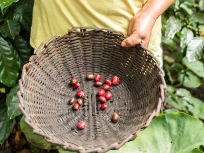 On the Community-Run Coffee Trail in Peru