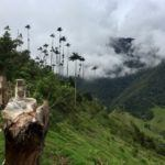 Beyond-the-Beaten-Trail Adventures in Los Nevados National Park, Colombia