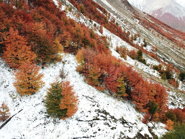 Cerro Castillo National Park with trees in fall colours and snow on the ground