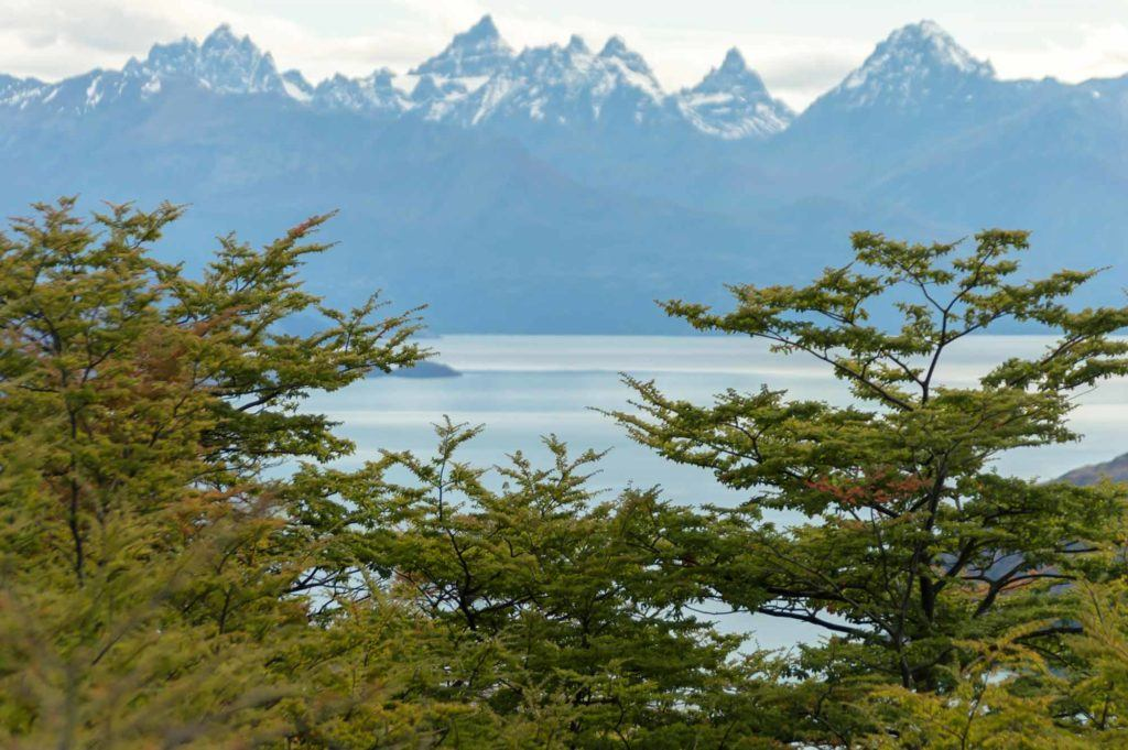 A view of Lago General Carrera through trees, taken along Patagonia's Carretera Austral