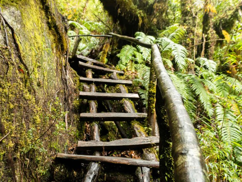 A wet wooden ladder on a hike in Pumalin National Park along Chile's Carretera Austral