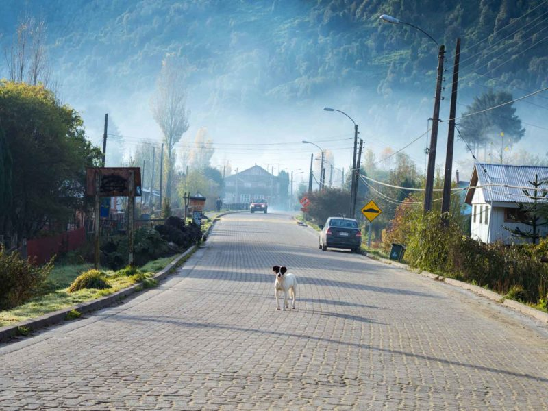 A dog in the road in Puyuhuapi, along Chile's Carretera Austral