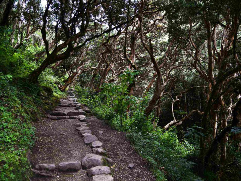 A well-marked section of Inca Trail passes through a cloud forest.