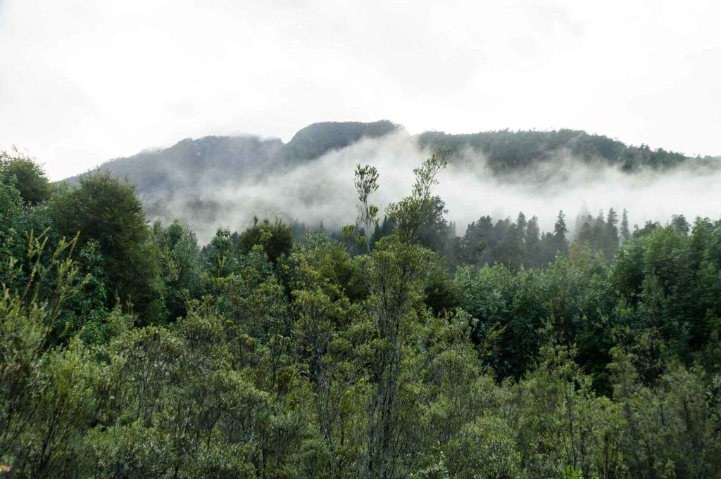 The mist rises over Parque Nacional Pumalin, reached by driving along the Carretera Austral in Patagonia