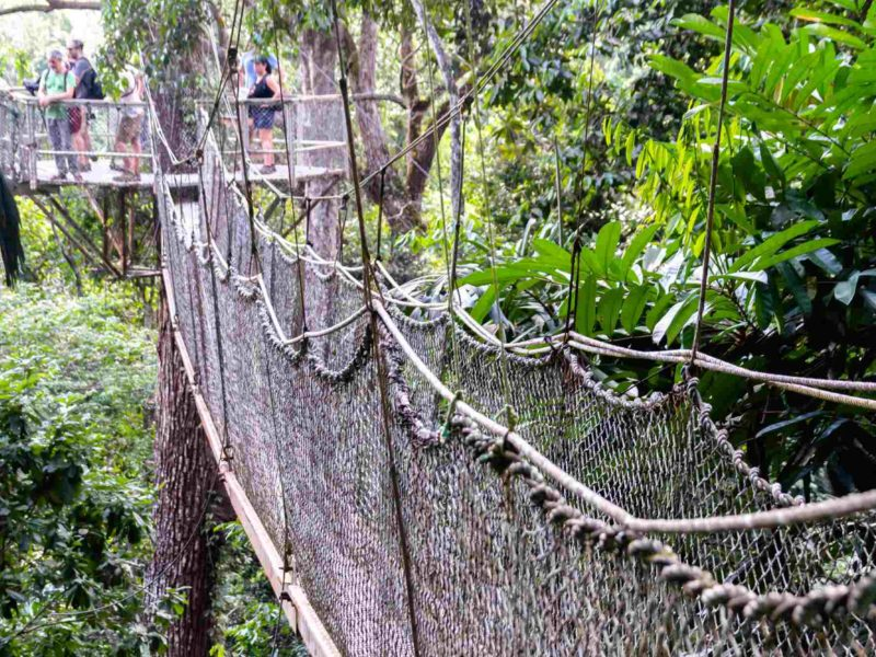 A fascinating tourist attraction, this rope walkway leads to a viewing platform in the rainforest canopy of Guyana.