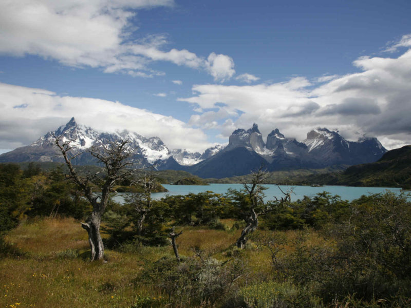 Low trees and grass lie before Lago Nordenskjold, as accessed from a short day hike in Torres del Paine National Park