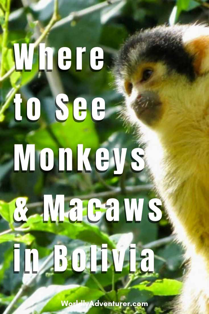 What you need to know about Madidi National Park in Bolivia, one of the most diverse places on Earth and a must-visit during a trip in Bolivia. If you like jungles, monkeys and macaws, that's the place to go! #bolivia